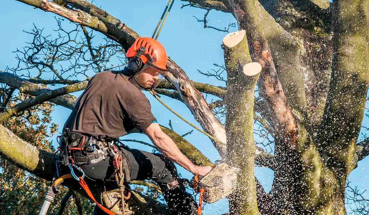 cordiste pour élagage de vos arbres dans le pas de calais